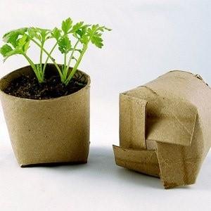 vegetable seedlings toilet rolls 2